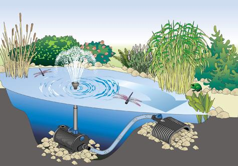 Setting up fish pond